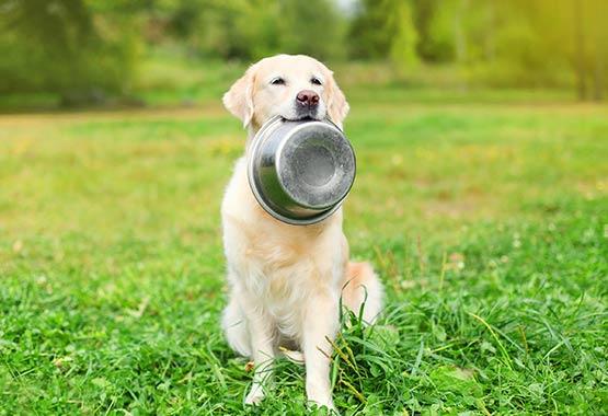 Food/Water Dish or Feeders