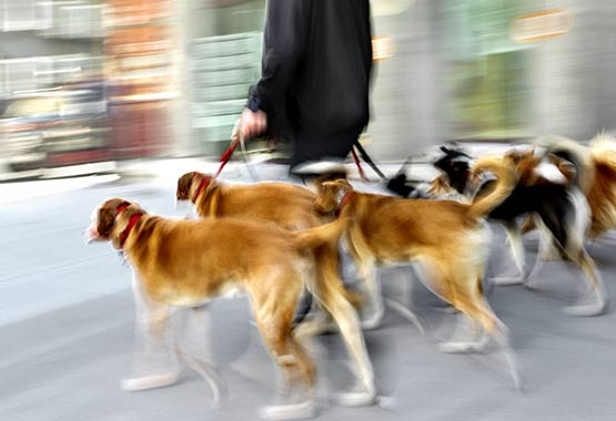 Dog Care to Dog Walkers