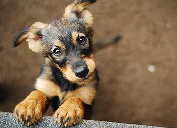 Buy or Adopt?