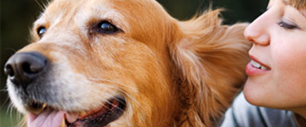 3 Tips for Cleaning dogs ears