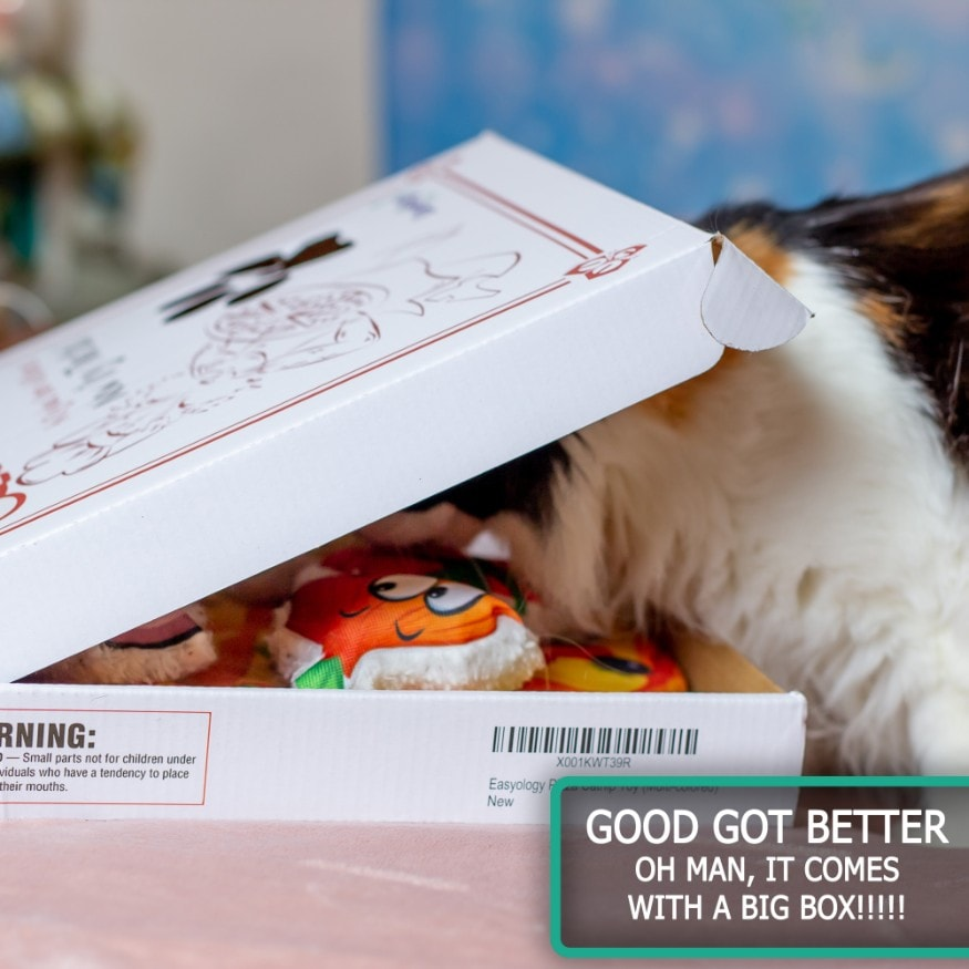 Easyology Pets Cat Pizza - Kitty Finds Pizza Inside Box