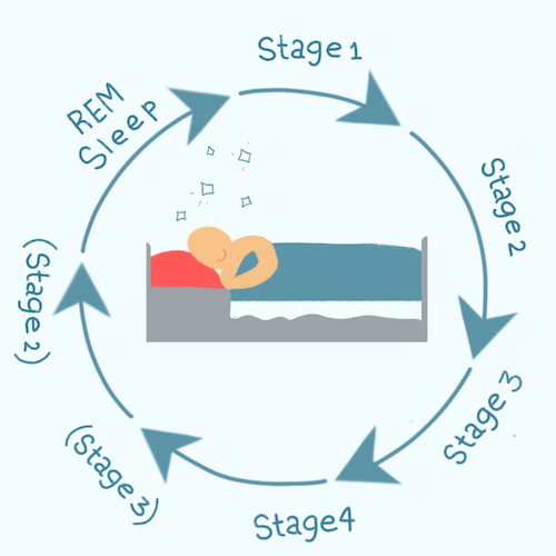 *Stages in parenthesis () can shift or be skipped depending on person and the number of sleep cycles.