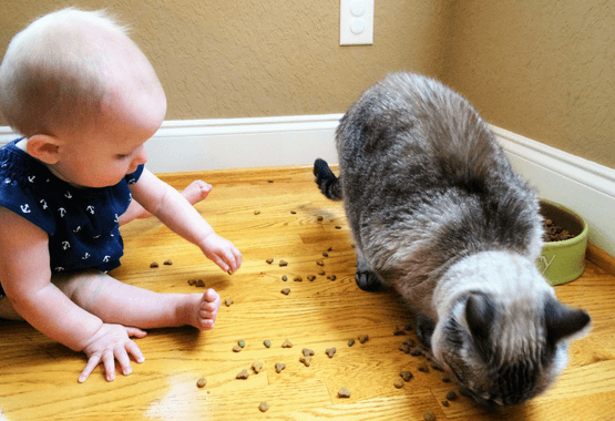 Keep baby out of cat food and litter box