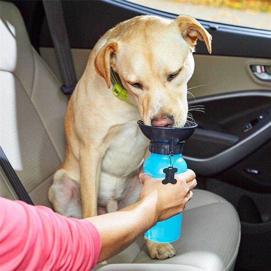 Dog Aqua Bottle