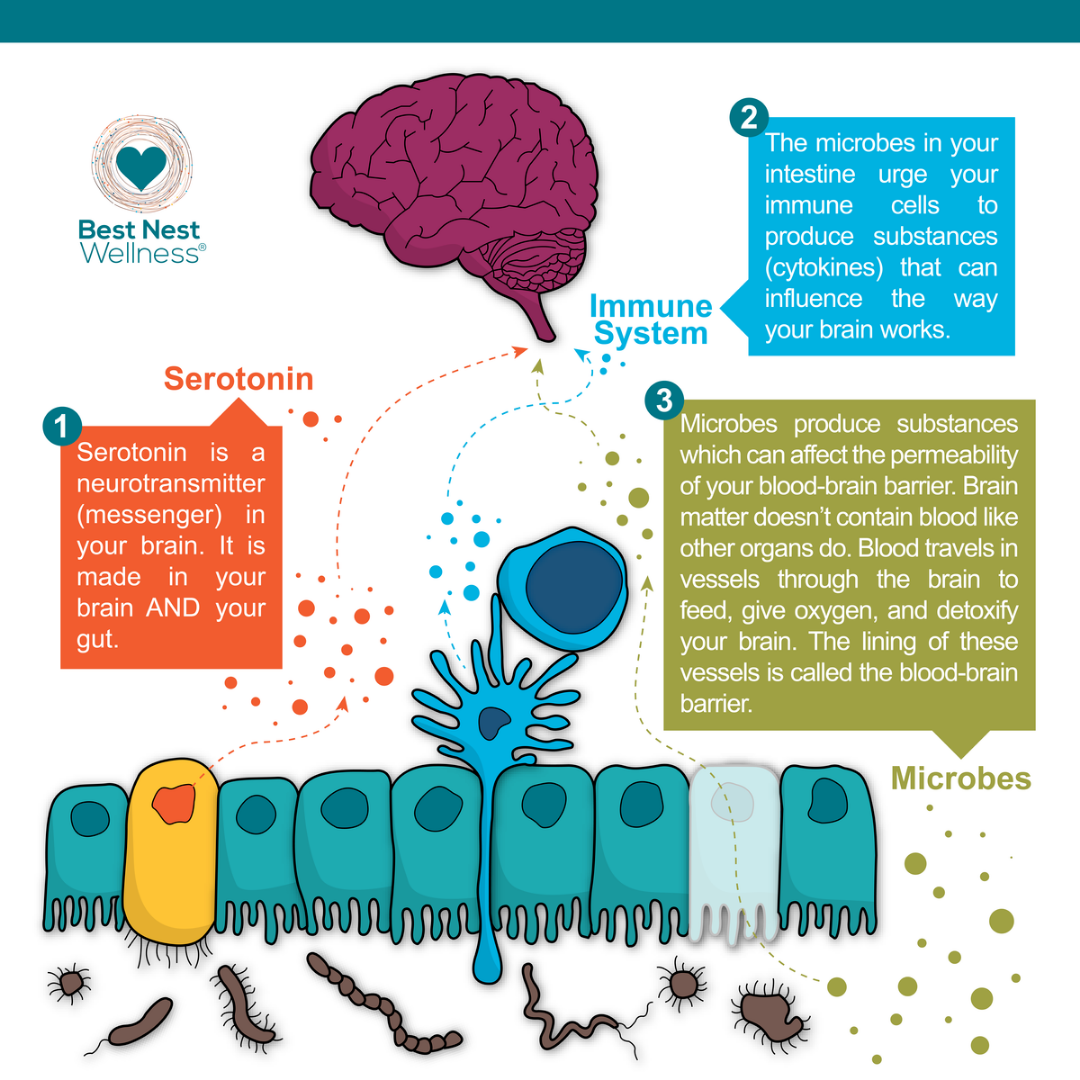 The Gut Microbe System