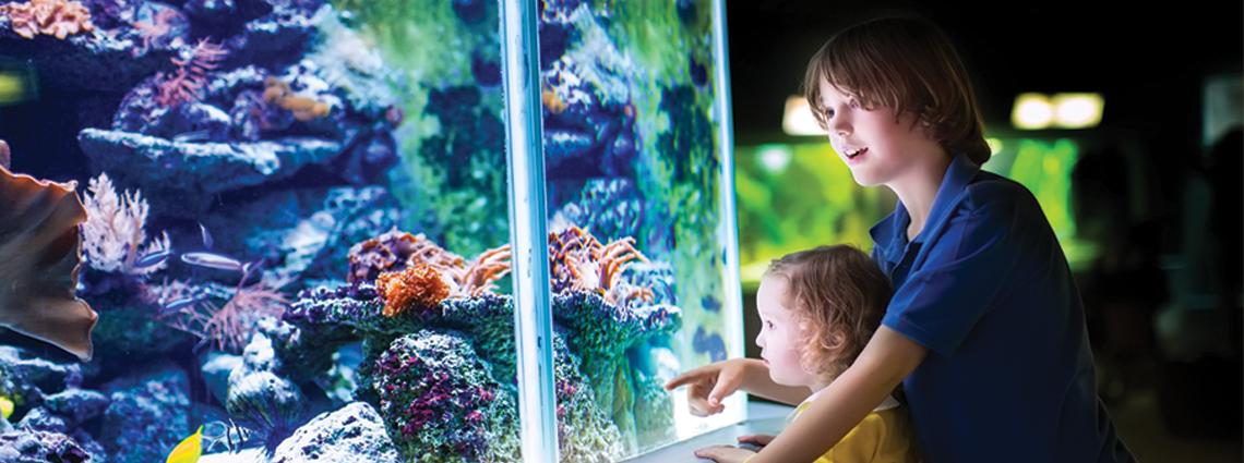 Aquarium Learning Center