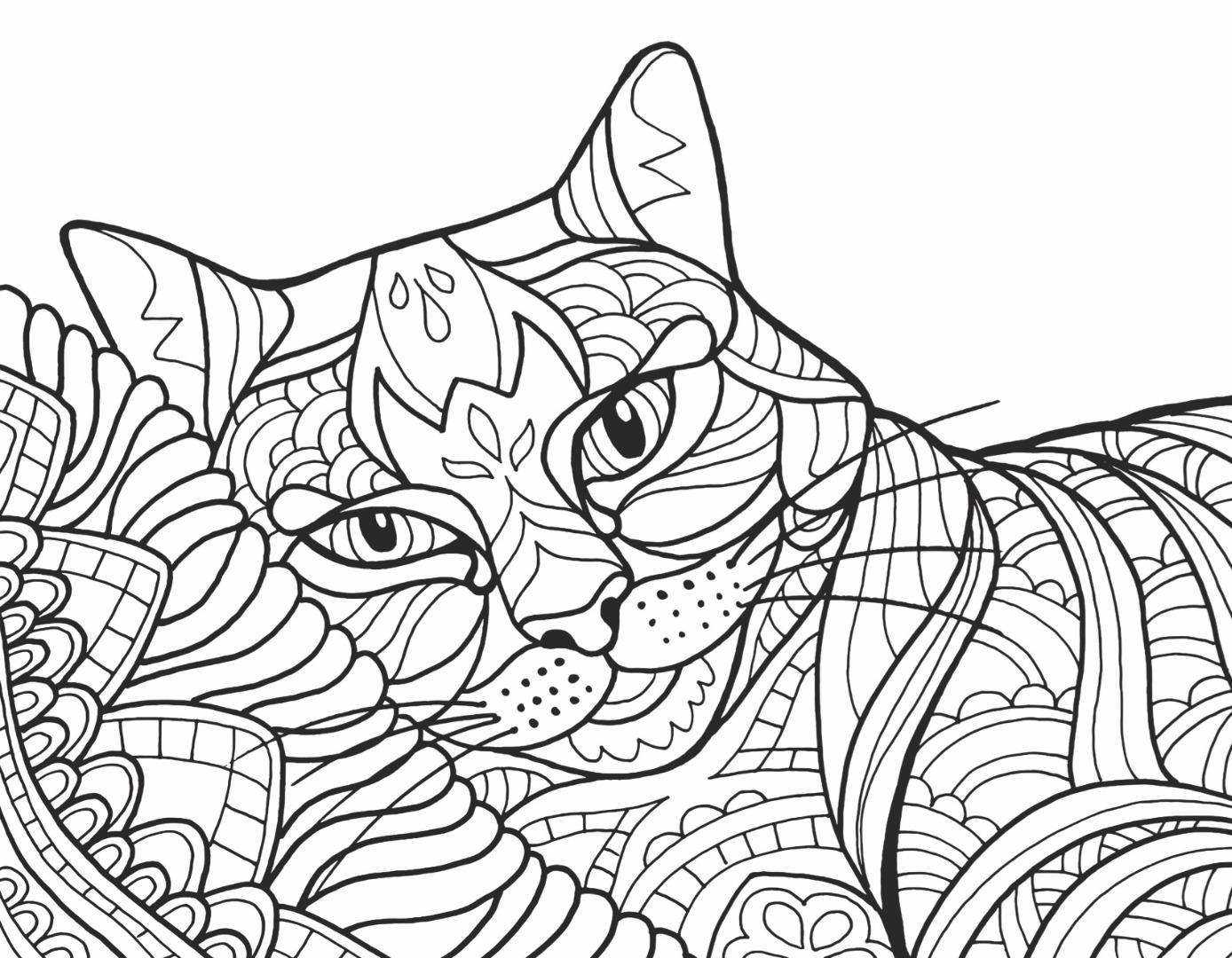 Cats Kittens Wildcats