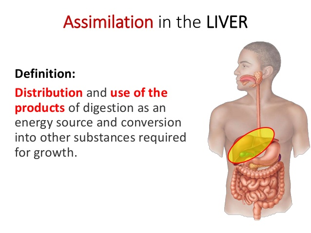 Nutrient_Assimilation_How_It_Matters_What_You_Eat