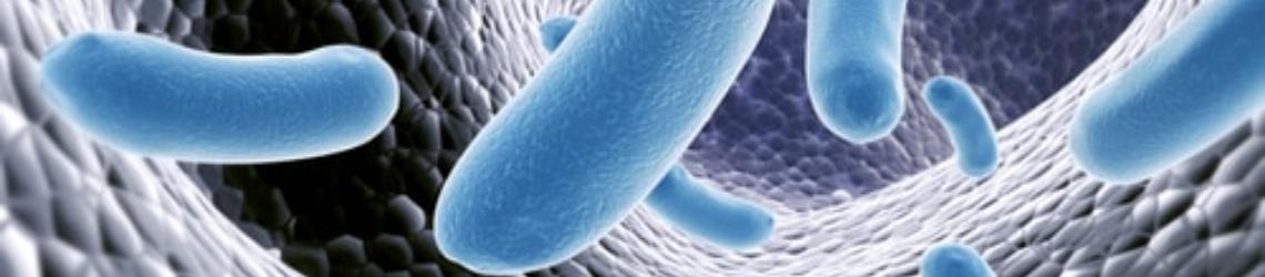 Gut microbios de s boulardii