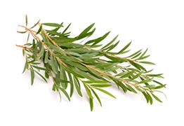 Deeveeant Numb Cream with Tea Tree (Melaleuca)
