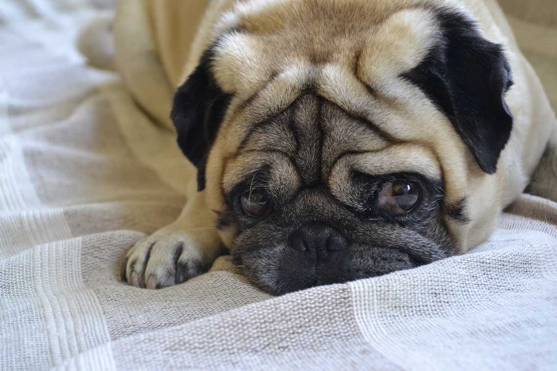 5 Tips to Calm Your Anxious Dog