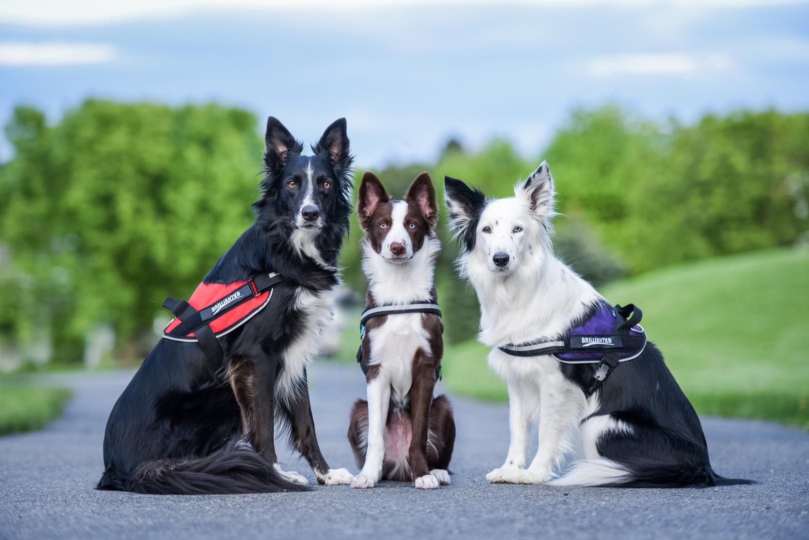 BrilliantK9 Ergonomic Dog Harness Large, Medium and Small Medium