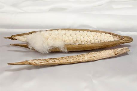 Kapokschote pflanzendaune kapok faser füllmaterial.jpeg