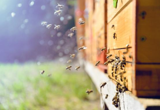 Bijen bij een korf