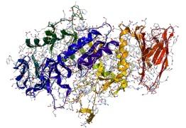 Digestive Enzymes in a vegetable powder drink
