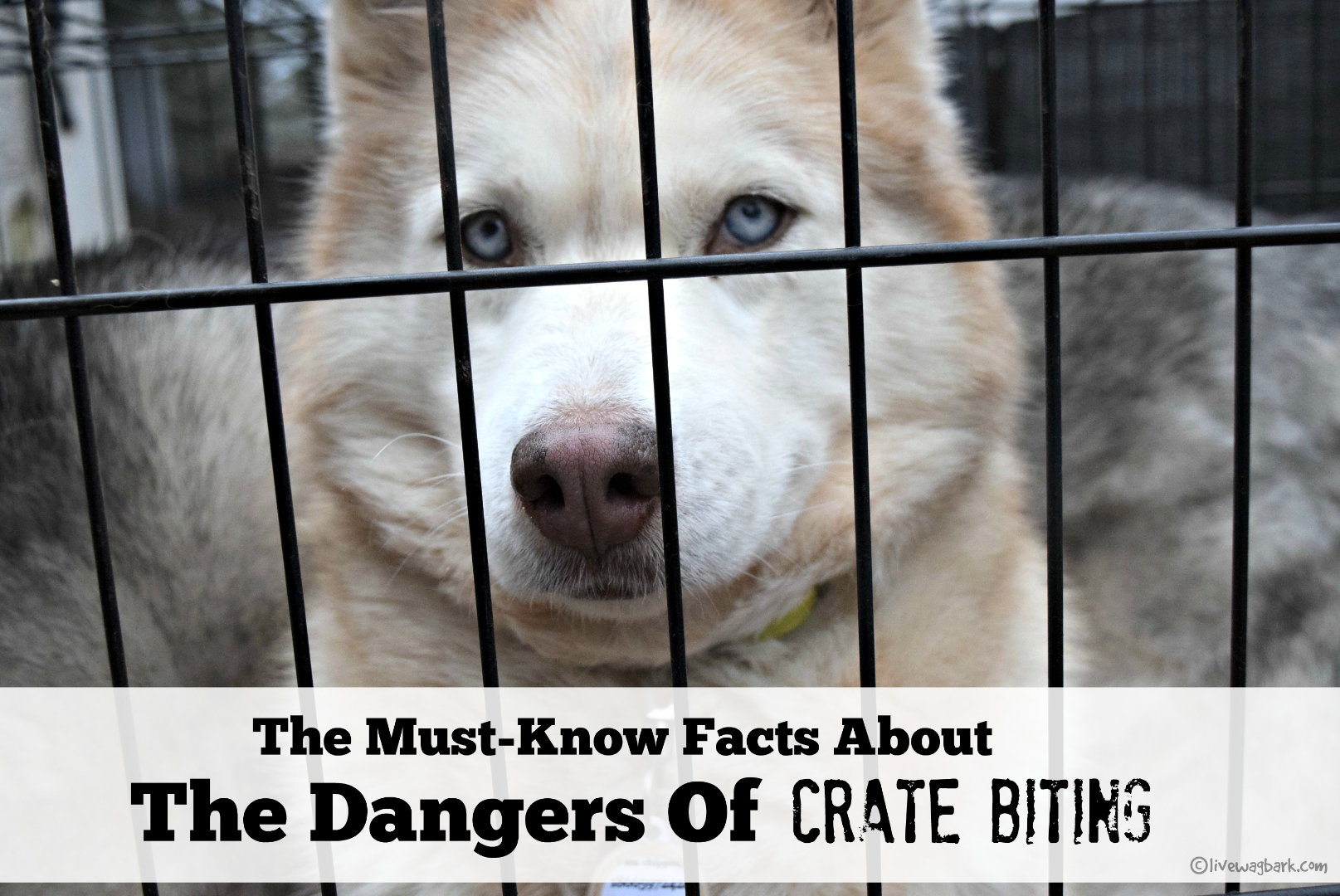 The Must Know Facts About Dangers Of Cage Biting 4knines Wiring Money