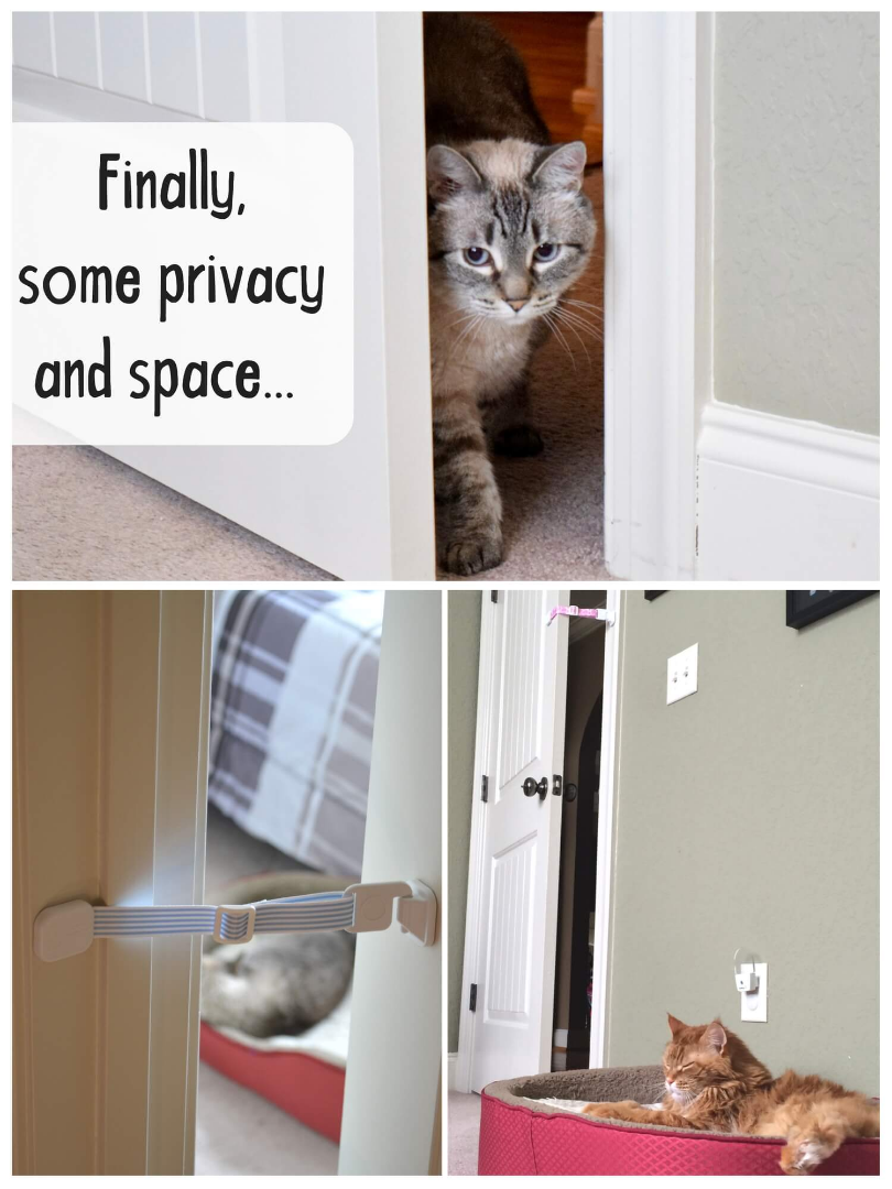 door prop - hold door open for cat