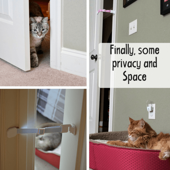 Hold door open for cat - Door prop