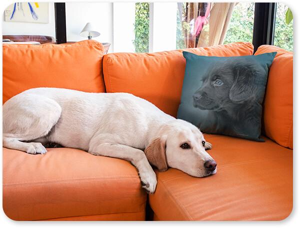 Dogs Collection Pillow Cover on an Orange Sofa Near a Labrador Dog Blue Eyed Puppy