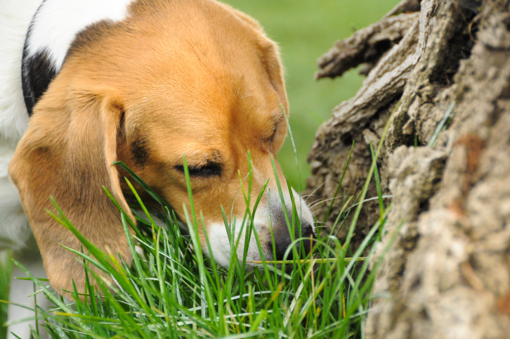 15 Plants That Are Poisonous to Pets