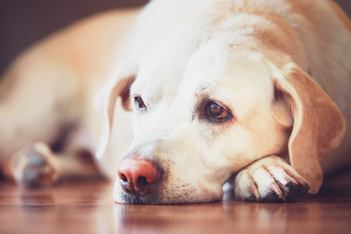 Everything You Need to Know About Heartworm Disease