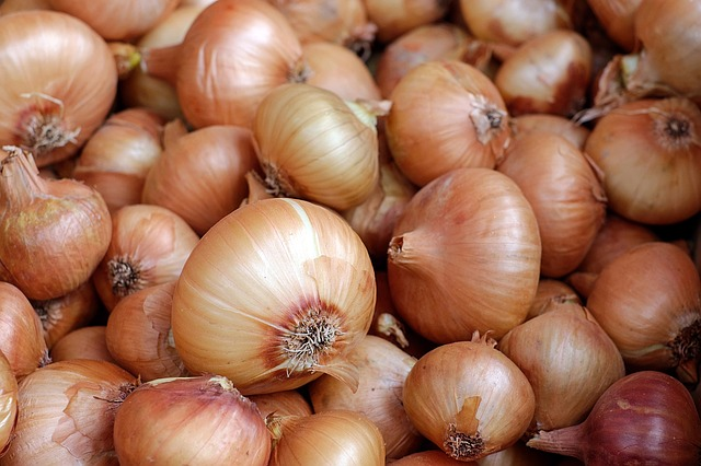 do not give your dog onions, scallions, garlic or chives on thanksgiving