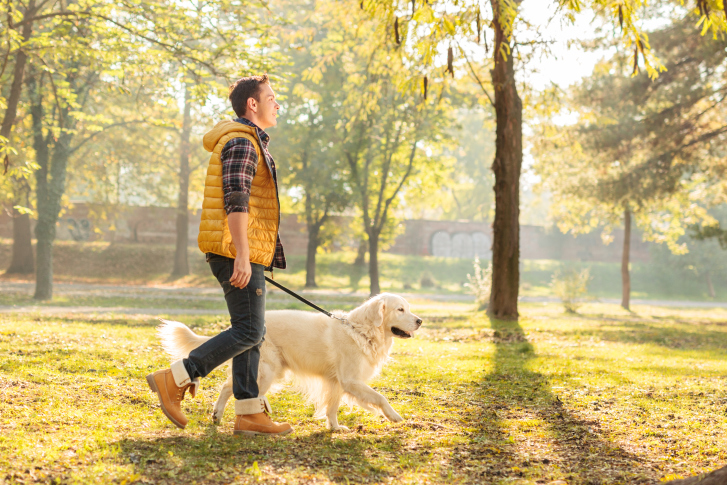 Common Sense Dog Walking!