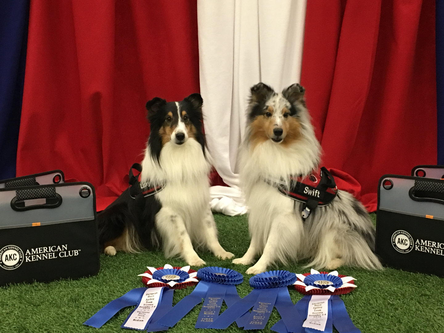 Lucky and Swift AKC National Championships