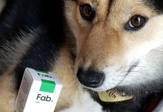 Fab CBD is helping dogs with anxiety nationwide!