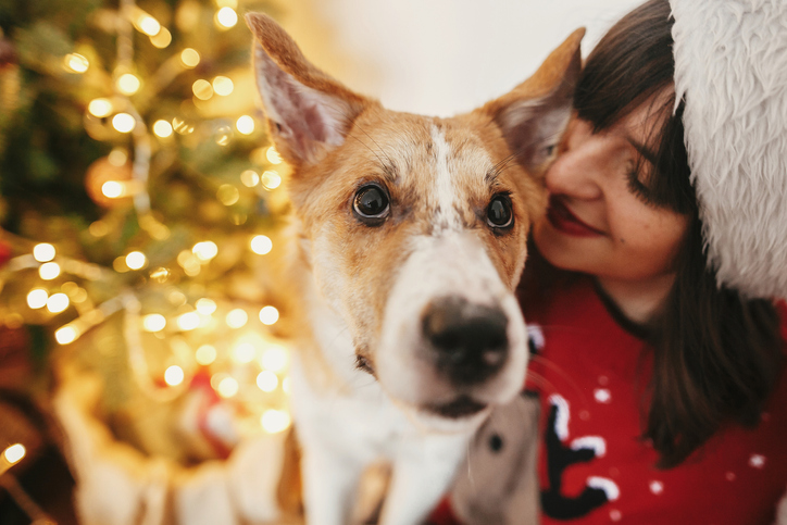A Grateful Holiday List of Things My Dogs Have Taught Me