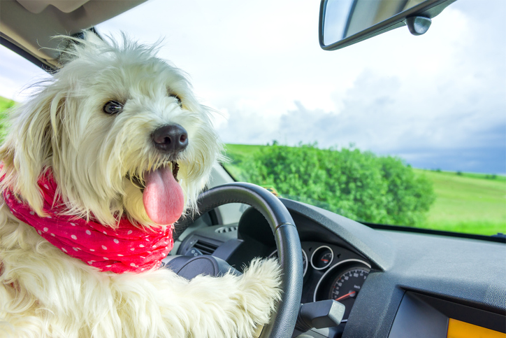 Holiday Planning: Scheduling an Adventure With Your Dog
