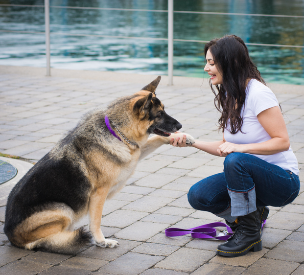 Dog Training: You Get What You Give