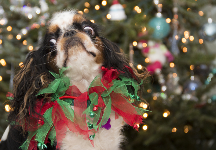 Christmas Confusion: Holiday Dog Safety Tips