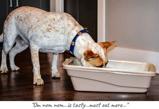Door Buddy - Dog proof litter box