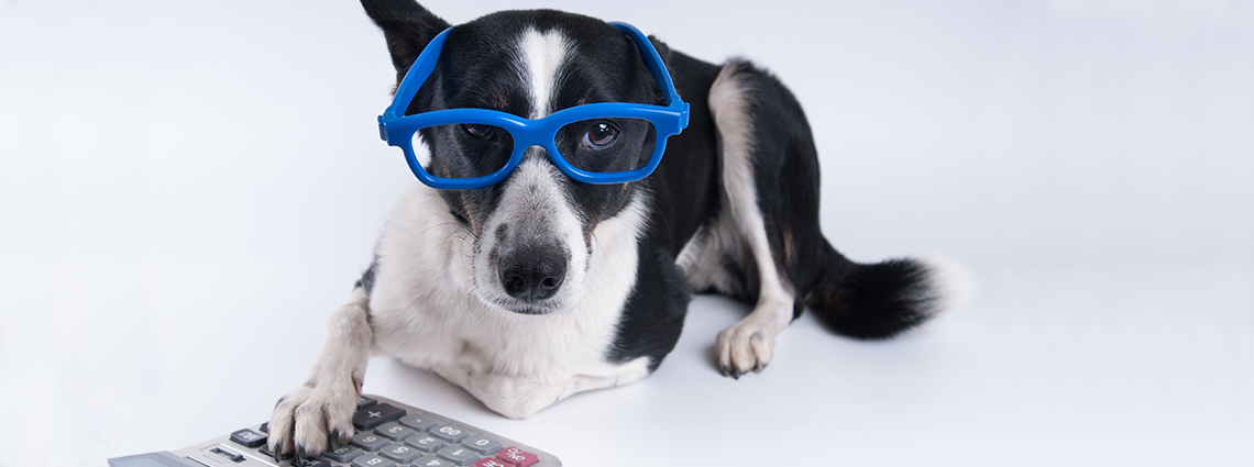 Dog with glasses and calculator