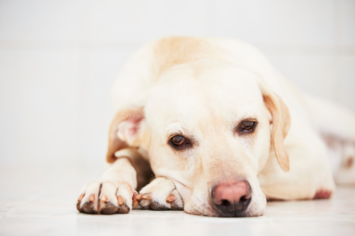 10 Ways to Keep Your Dog From Getting Bored